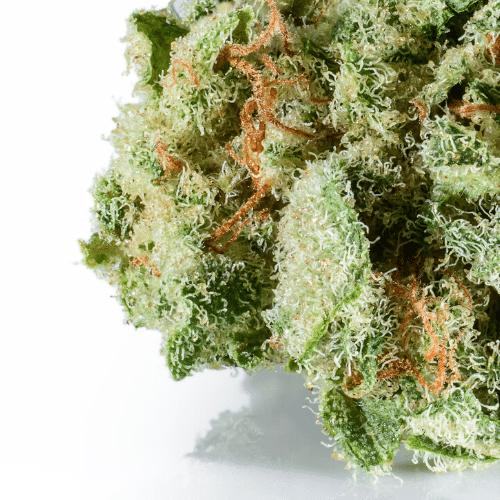Buy CBD flower bulk online