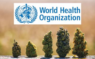 La ONU reconoce oficialmente que el cannabis tiene propiedades medicinales