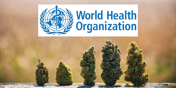 CANNABIS WORLD HEALTH ORGANIZATION