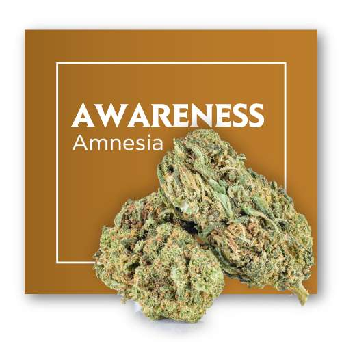 Flores de CBD Cannabis AWARENESS (Amnesia)