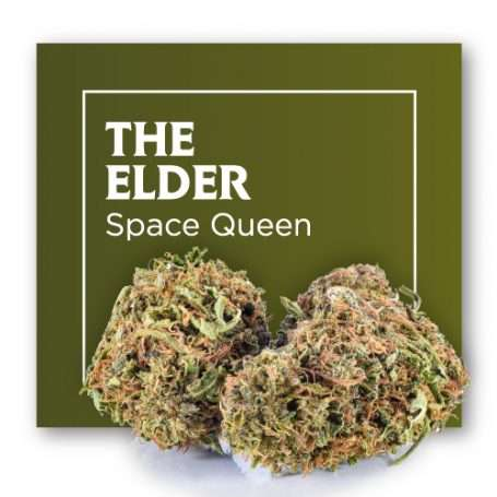 Flores de CBD Cannabis THE ELDER (Space Queen) – Outdoor