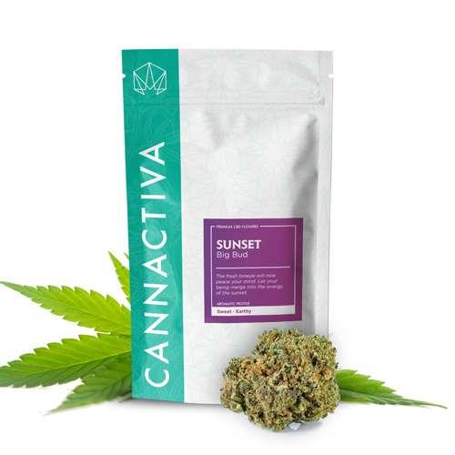 Compra flores de CBD Cannabis SUNSET (Big Bud)
